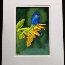 Bluebird on a Sunflower