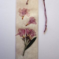 Light pink oleander pressed flower bookmark.