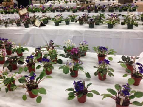 Flower Shows in the Home Show!