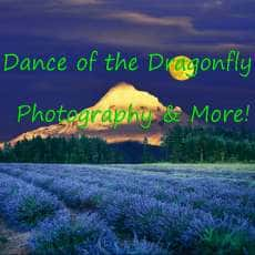 Dance of the Dragonfly