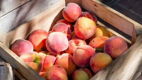 Croswell School Peach Festival