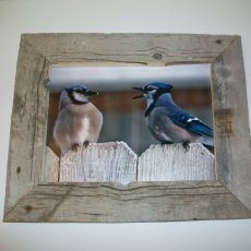 11x14 old barnwood frame with bluebirds.