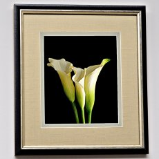 White Calla Lillies 1